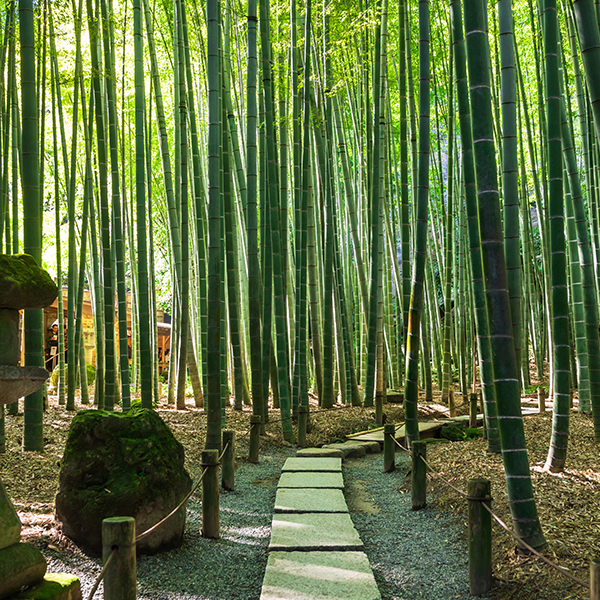 精神文化の根付く禅寺の竹林
